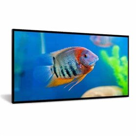DynaScan 55″ display - High Brightness Fanless LCD with Narrow Bezel